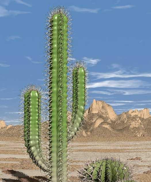 Apa yang dimaksud dengan tumbuhan Hydrofit? - Dictio Community