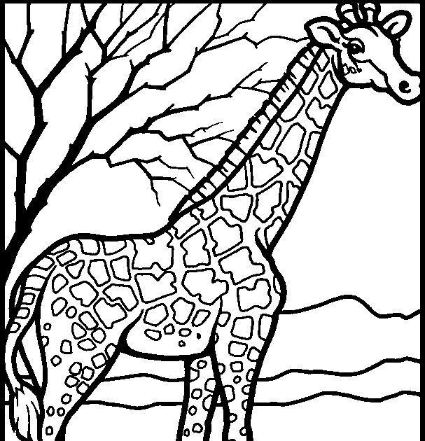 Malvorlage Giraffe Zebra