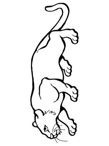 Jaguar Roar Lion Jaguar Growls:Shabby Paper