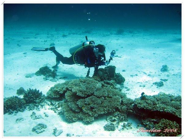 Snap Shot: 危險海洋生物