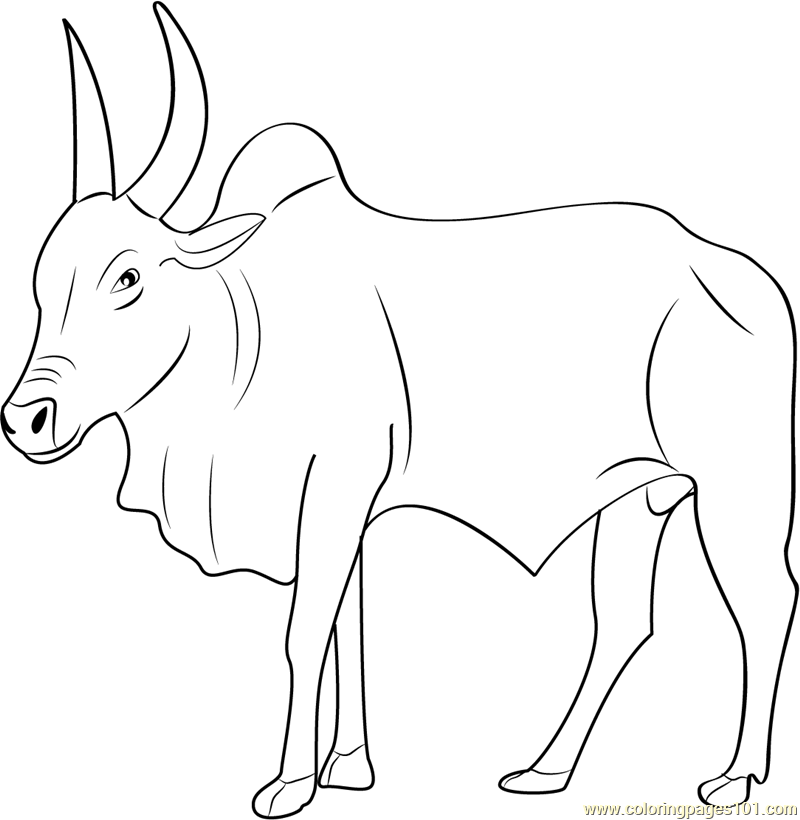 The gallery for \u0026gt; Spanish Bull Outline
