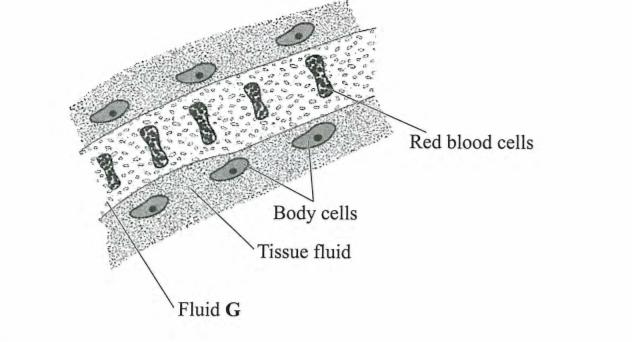 KCSE PIVOT BIOLOGY