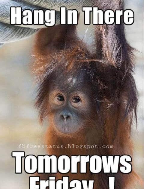 Thursday Meme : thursday, Happy, Thursday, Funny