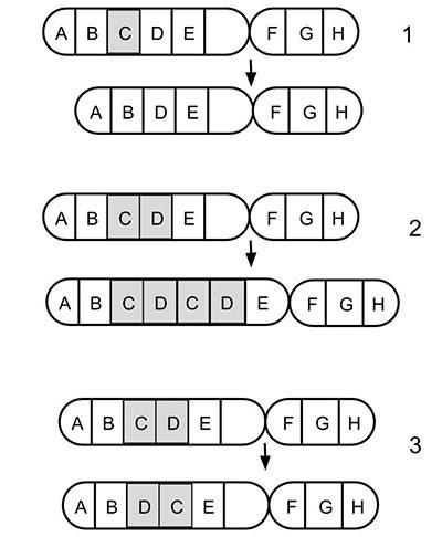 Dna Mutation Simulation Answer Key Biology Corner
