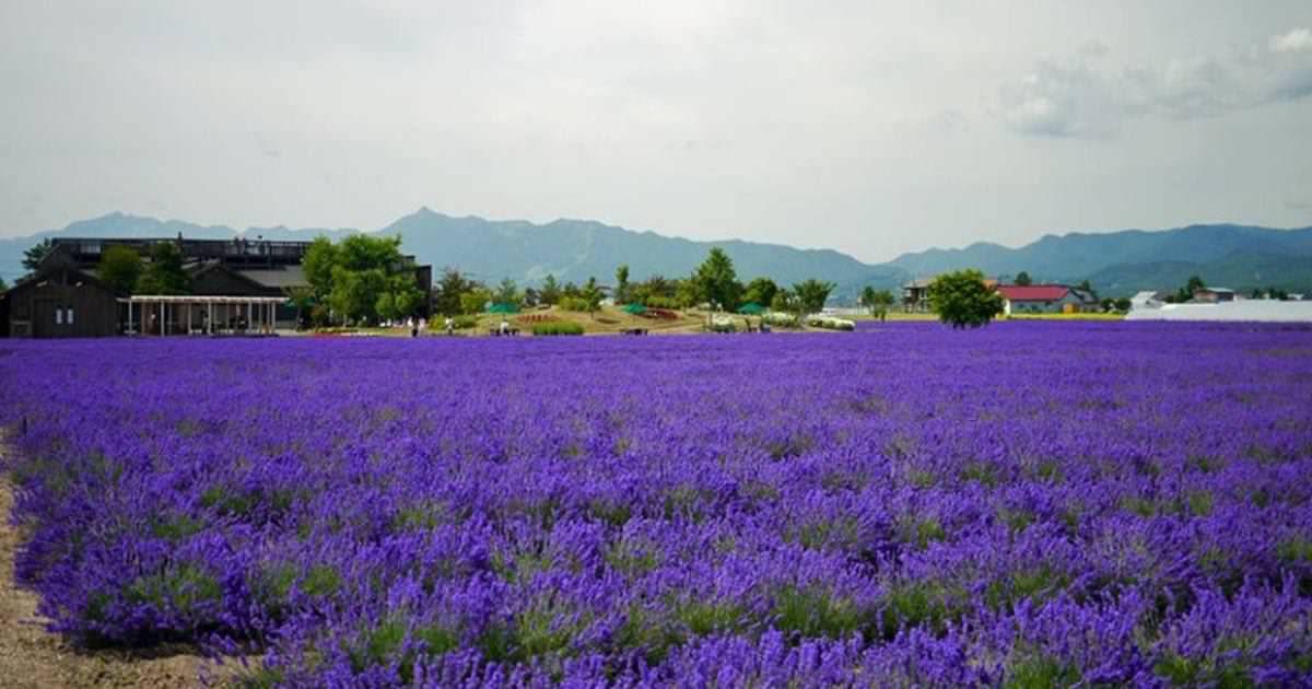 花の畫像について: ぜいたく北海道花季2020