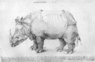 Dürer Rhinozeros Vorlage   Ausmalbilder und Vorlagen