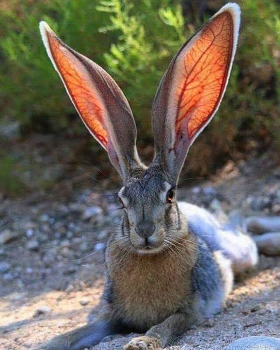 Real Bunnies For Sale Near Me : bunnies, Bunnies, Petfinder