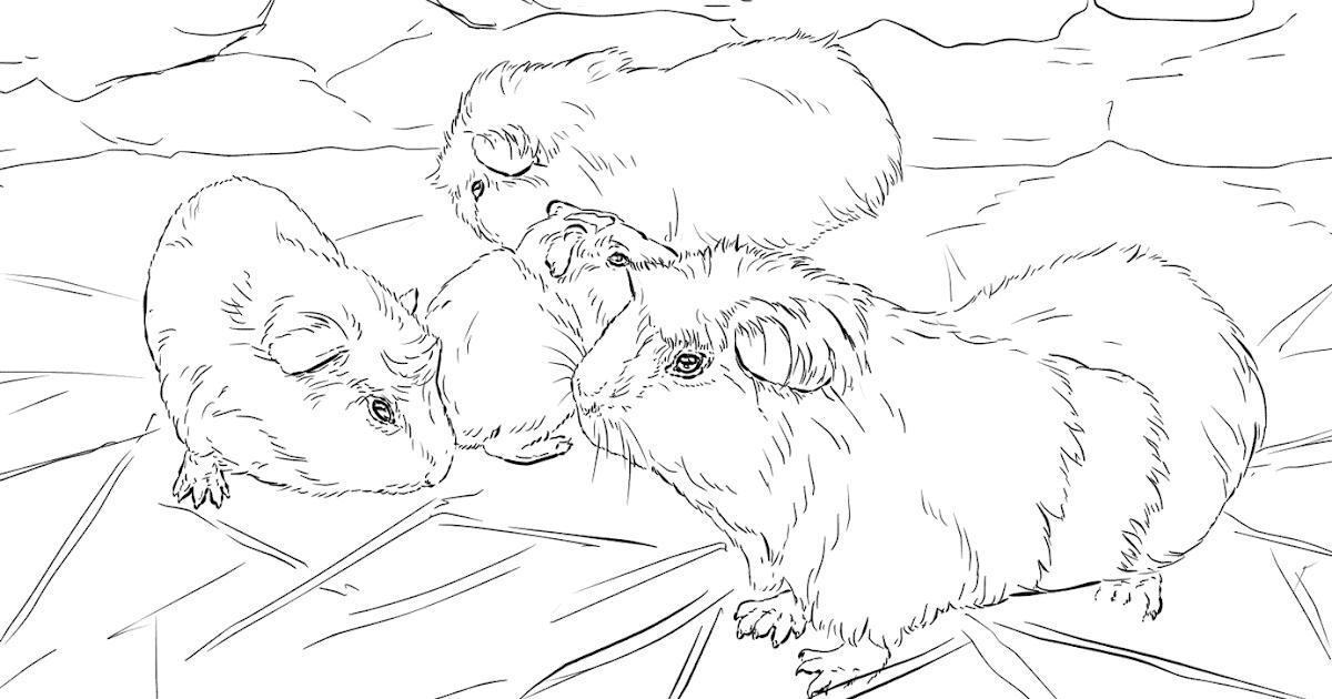 Malvorlage Meerschweinchen