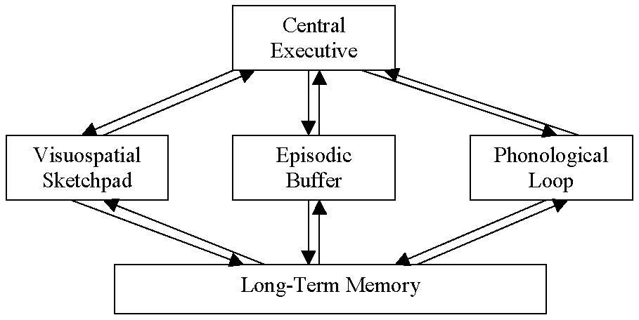 IB Notes: Memory Models: Working Memory Model