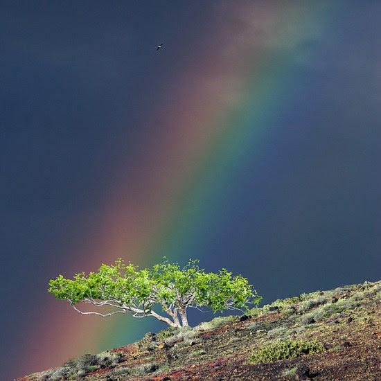 gambar pelangi indah di dunia  Pemandanganoce