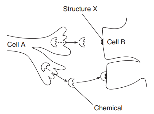 31 The Diagram Below Represents A Cell Of A Green Plant