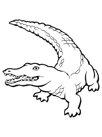 Realistic Alligator Drawing : realistic, alligator, drawing, Realistic, Alligator, Drawing, Ideas