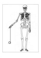 Körperumriss Mensch Ausmalbild   Vorlagen zum Ausmalen ...