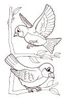 Ausmalbilder Vogel Zum Ausdrucken