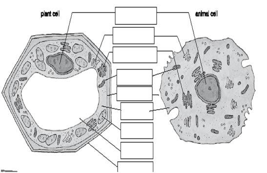 Plant Diagram Unlabelled