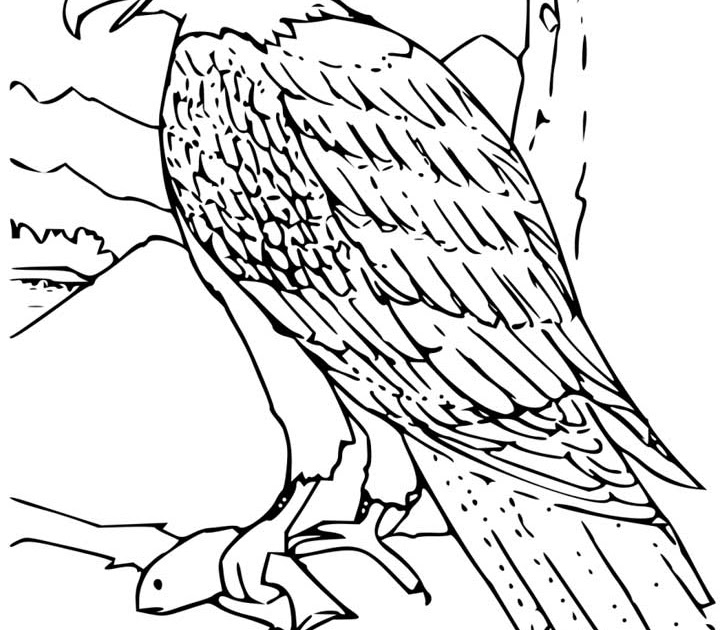free printable coloring pages eagle 2015
