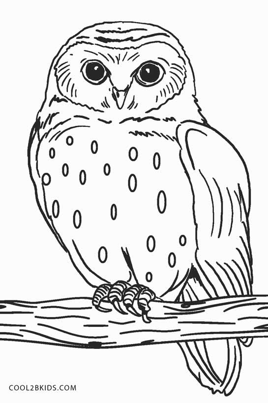 Printable Owl Coloring Pages : printable, coloring, pages, Snowy, Coloring, Pages