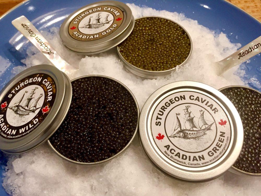 Photo Acadian Sturgeon