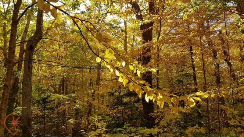 forêt acadienne