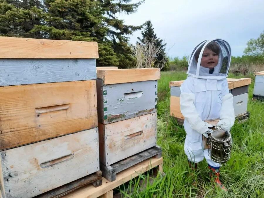 petit garçon près d'une ruche