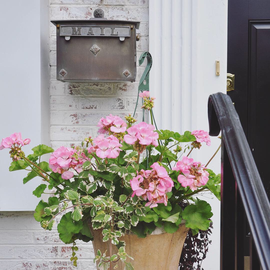 Pink geraniums and trailing greenery in a cement urn liven up the area by the front door.