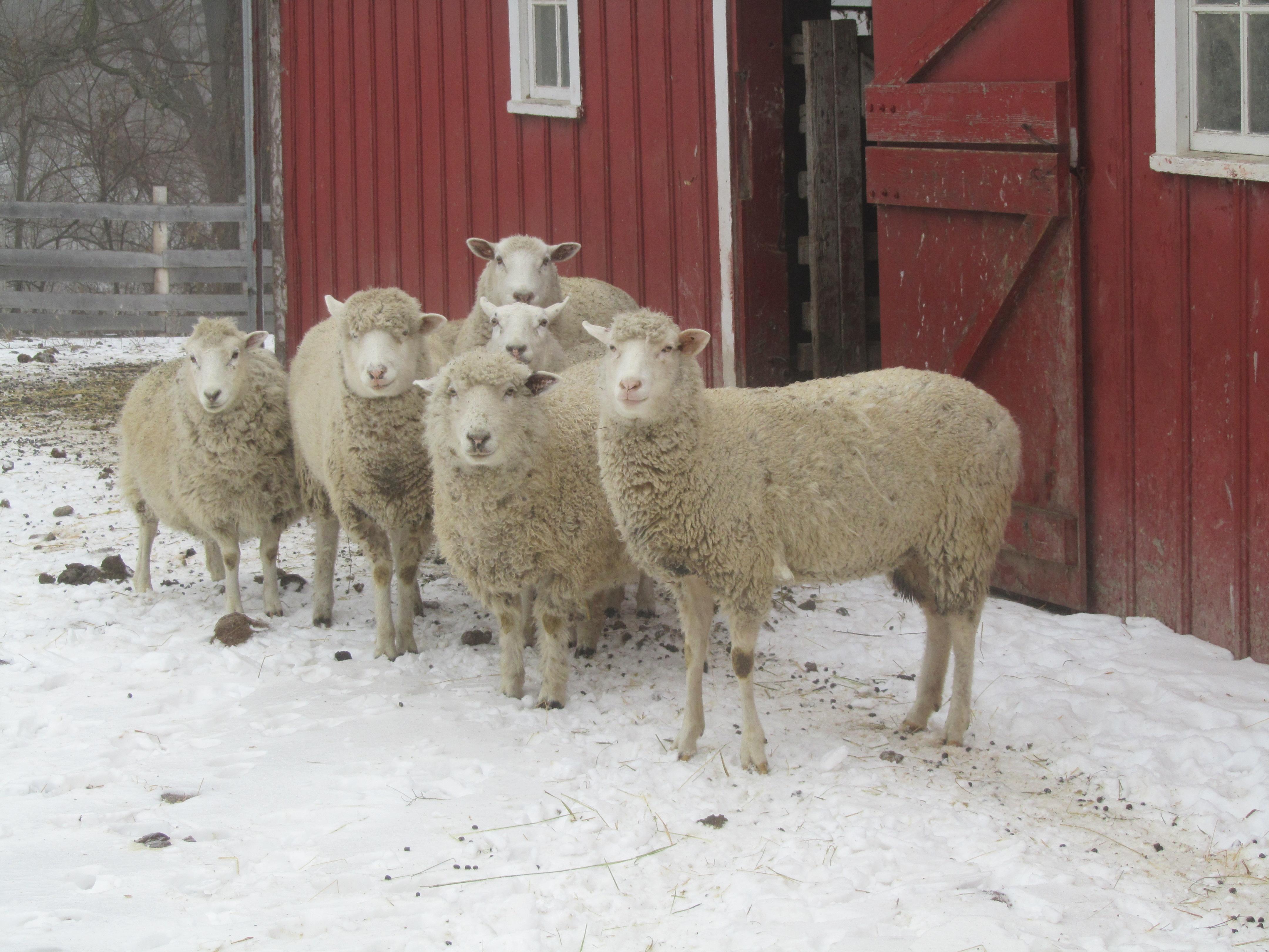 Keeping Warm On The Farm