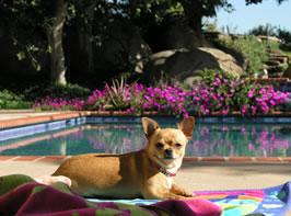 Rita sunbathing.