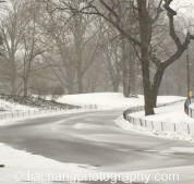 Snow in Central Park on January 26, 2015. Photo by Lia Chang