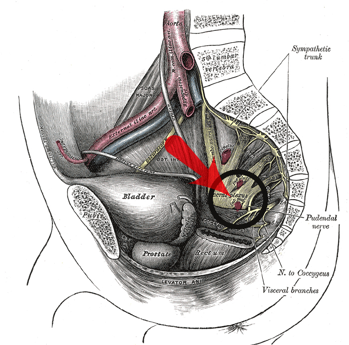 Pudendal Neuralgia and Nerve Pain - Location of Pudendal Nerve