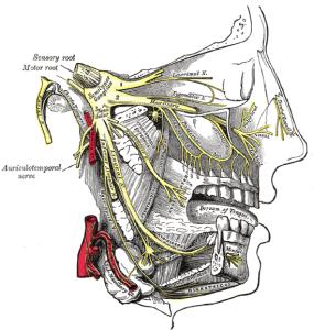 Trigeminal_Nerve_Pain_Anatomy