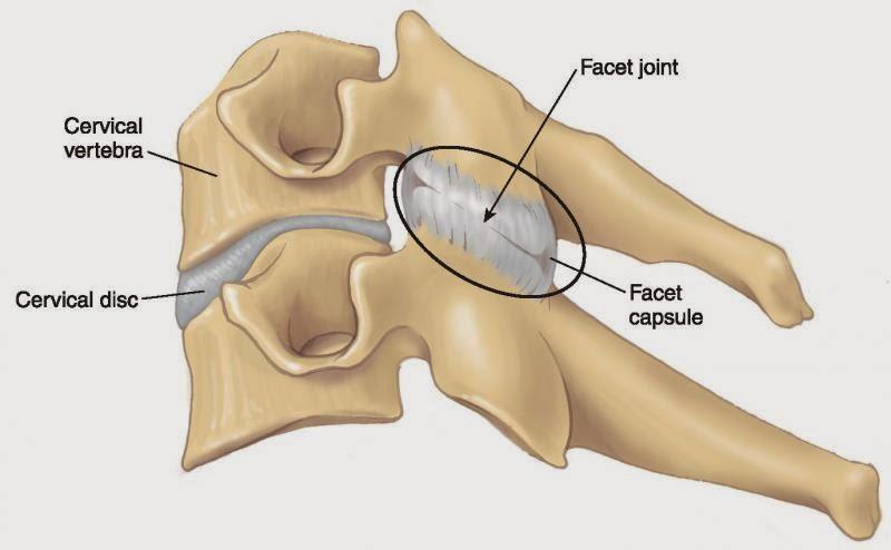 capsular ligament of spine