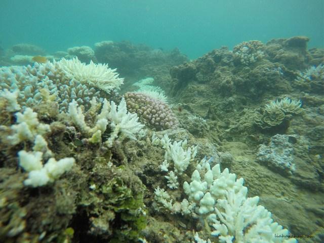 teluk-kiluan-terumbu-karang