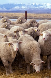 Create Your Own Social Strategy, Don't Be Part of the Flock