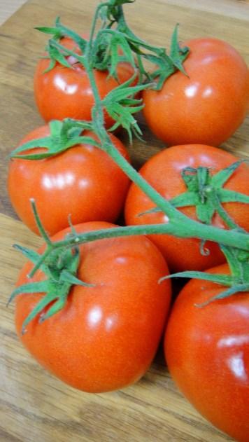花蓮秉達有機農場的有機牛番茄