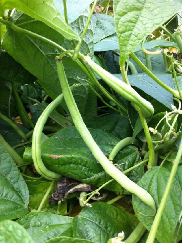 法國創意家常料理-四季豆番茄風味溫莎拉-5