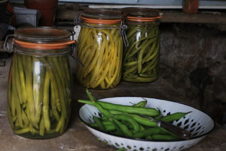 蔬菜在我的罐子裡-罐頭四季豆 CONSERVE D'HARICOTS VERTS