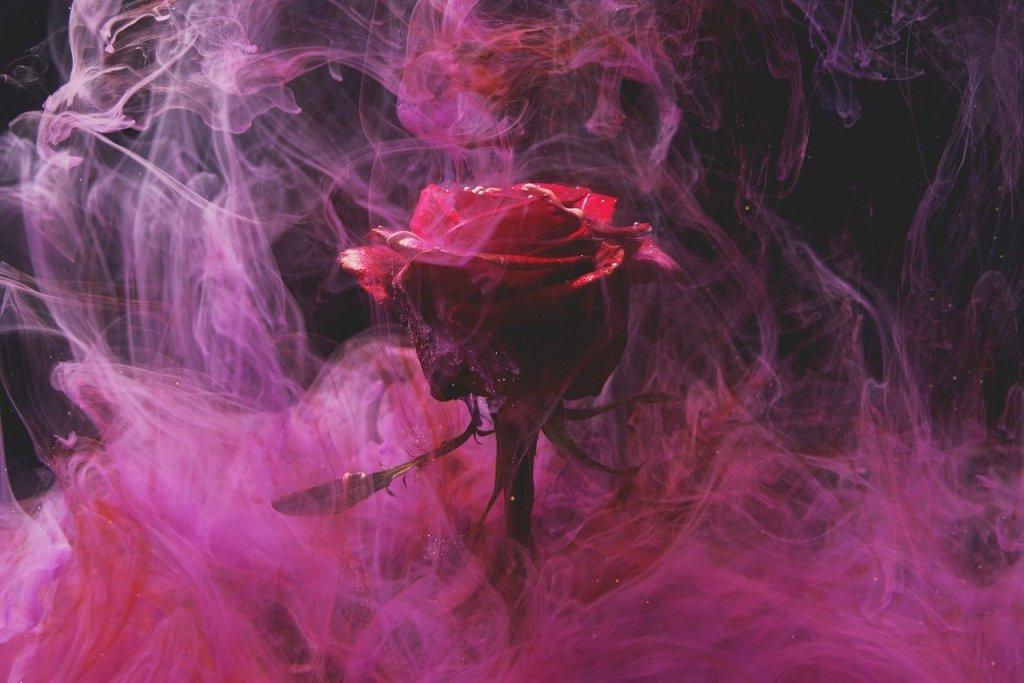 rose, red, smoke-5974372.jpg