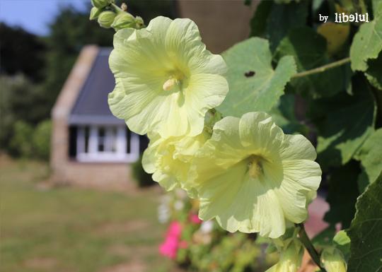 brehat-fleurs-03-by-libelul