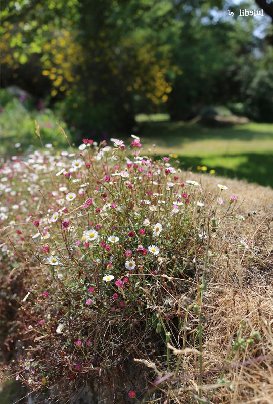 brehat-fleurs-06-by-libelul