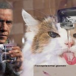 Obama Using Toxoplasma gondii To Brainwash Cat Owners