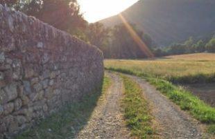 path forward into the light