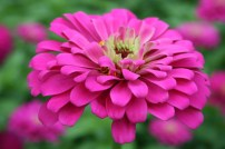 Flower Amongst Friends