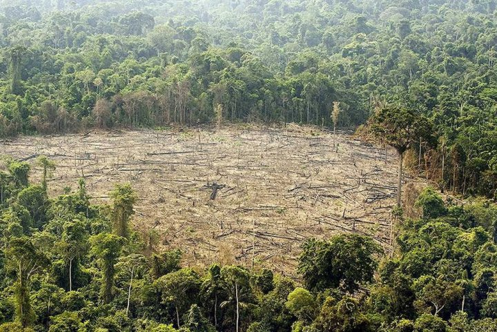 L'Europe doit mettre un terme à la déforestation importée