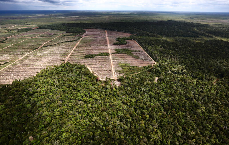 Investigation indicates FSC-certified company intentionally used fire to clear Indonesian forests for palm oil