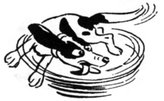 immagine cane che si morde la coda