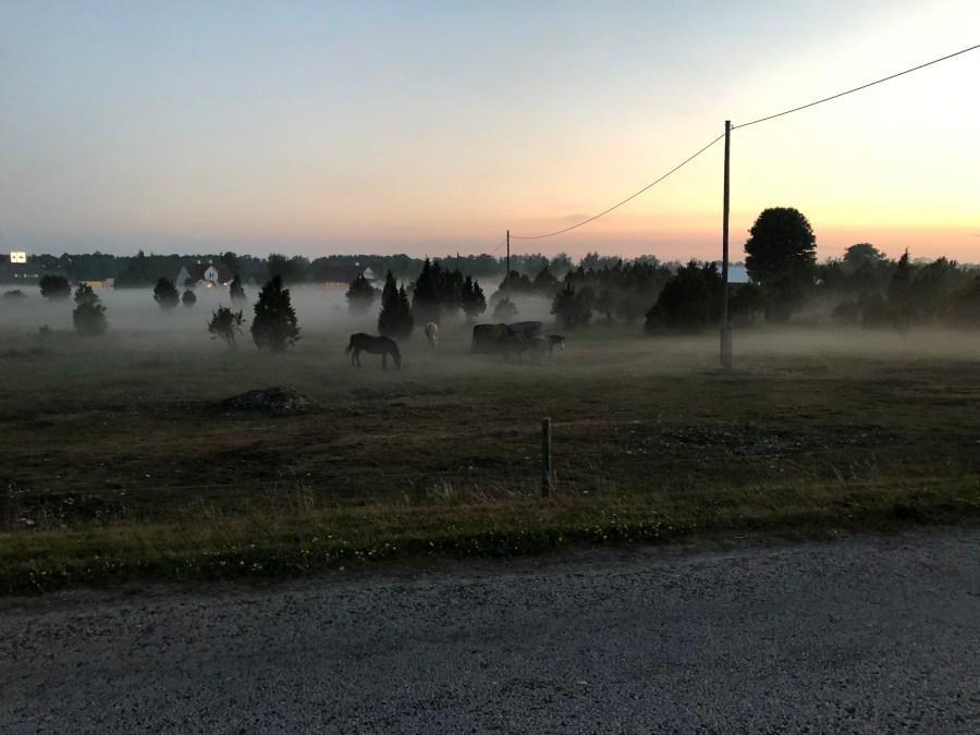 Hiidenmaa ja hevoset - Liberta.fi