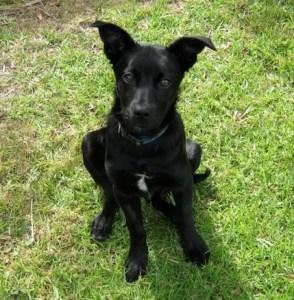 writer's dog Milly 1