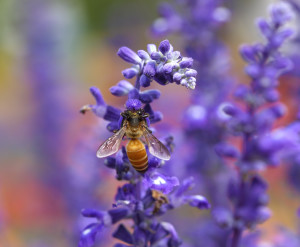 smell evokes memory with lavender