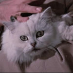 bond white cat caressed by villains hand