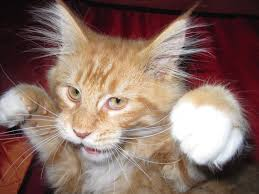 "the boxing cat origin of ""screw the punch"""